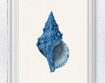 Sea shell electric blue  Sea life print -  seashells wall art home decor -A 4 print SAS206