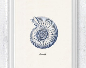 Sea shell  in blue - Nautilus 3 (Ammonitida) Sea life print -  seashells wall art home decor -A 4 print SAS236