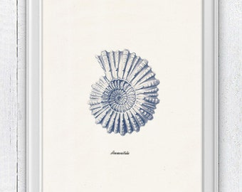 Sea shell  in blue - Nautilus 2 (Ammonitida) Sea life print -  seashells wall art home decor -A 4 print SAS212