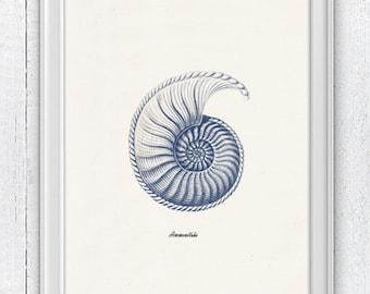 Sea shell  in blue - Nautilus 4 (Ammonitida) Sea life print - seashells wall art home decor -A 4 print SAS235