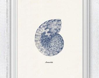 Sea shell  in blue - Nautilus 1 (Ammonitida) Sea life print -  seashells wall art home decor -A 4 print SAS234