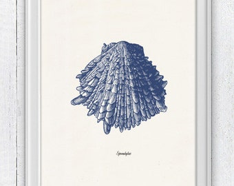 Vintage sea shell-Spondylus Vintage sea shell print- seashells wall art home decor -A 4 print- sea life SAS228