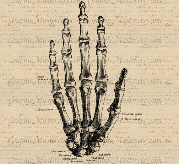 Skeleton Hand Anatomy Fist Digital Collage Sheet Image Etsy