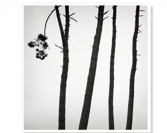 Minimalist Tree Print, Living Room Wall Art, Woodland Print, Black & White Photography, Zen Prints, Meditation Spa Decor, Organic Stripes