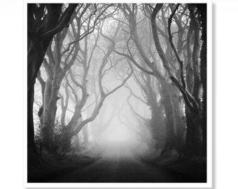 Gothic Print, The Dark Hedges, Ireland, Irish Gift Idea, Gift for Boyfriend, Irish Art, Made in Ireland, Home Office Wall Art Prints