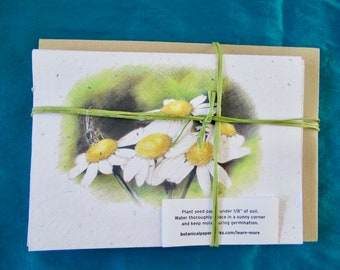 WILDFLOWER SEEDED PAPER Feverfew notelets-Set of Five Matching