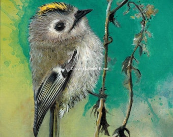WILDFLOWER SEEDED PAPER Goldcrest Notelets - Set of Five Matching Cards with Envelopes - Ideal for Summer