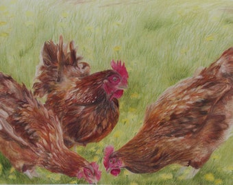Giclee print - Spring chickes