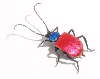 30-12 Ground Beetle