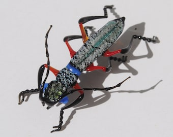 30-12 Phillippino Tiger Beetle