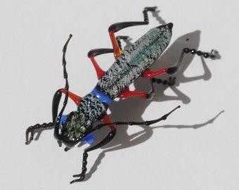 30-12 Phillippino Tiger Beetle