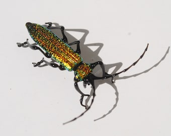 30-12 Wood-Boring Beetle