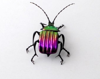 30-12 Violet Ground Beetle