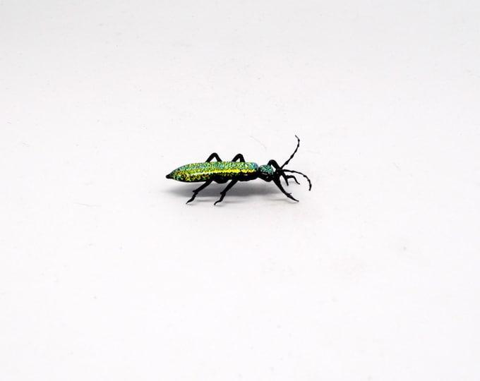30-12 Wood-Boring Beetle