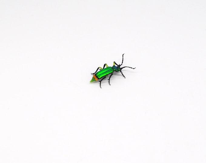 30-12 Flower Beetle