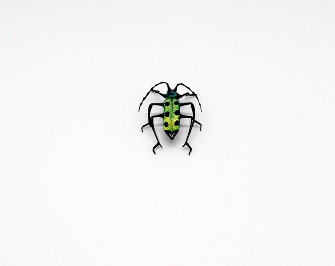 30-12 Longhorn Mullein Beetle