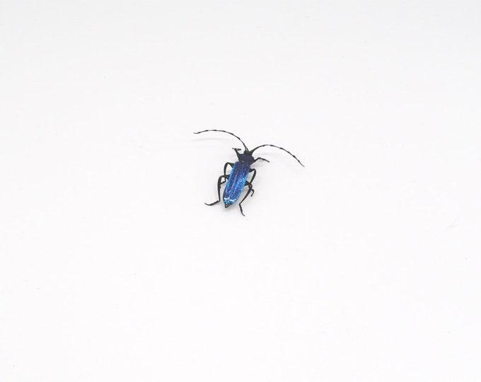 30-12 Tanbark Beetle
