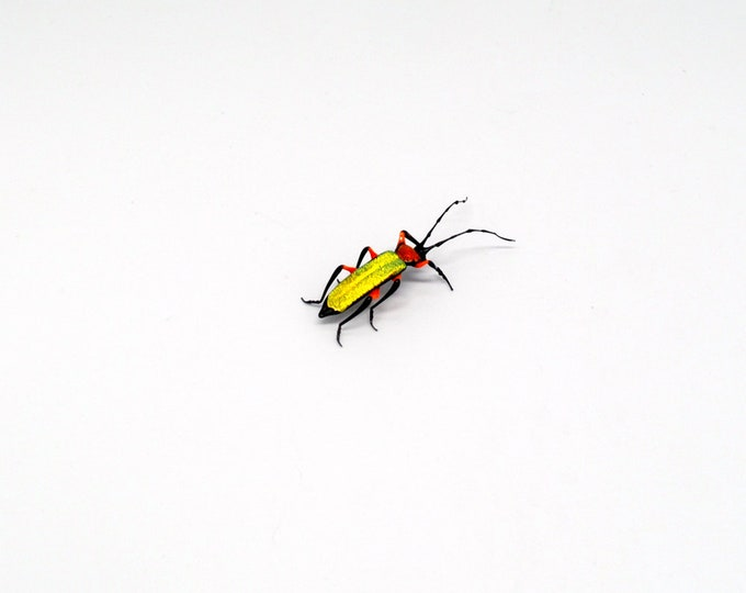 30-12 Texan Longicorn Beetle