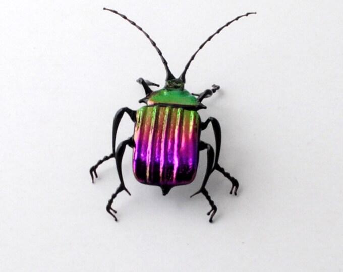 30-12 Violet Ground Beetle