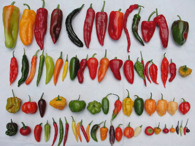 5 Varieties of HOT Pepper Seed Mix - Anaheim, Cayenne, Jalapeno, Santa Fe  Grande, Serrano Tampiqueno Peppers 10 Seeds