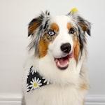 Daisy Dog Bandana