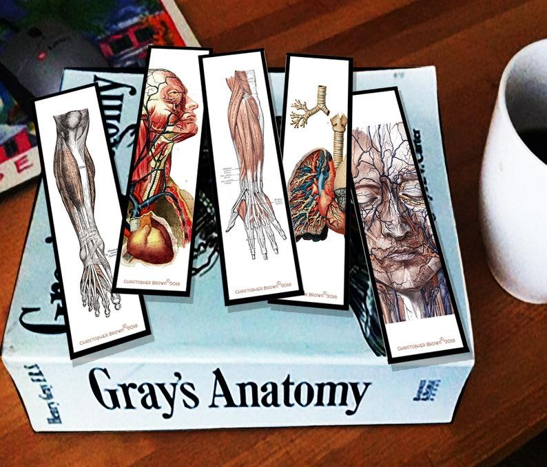Bookmarks Human Anatomy Grays Anatomy Etsy
