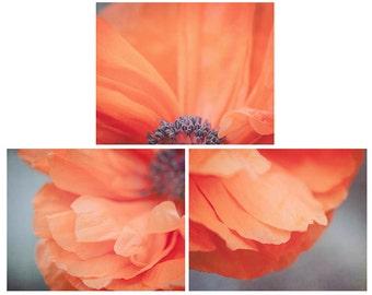 Set of 3 Poppy Flower Photographs, Orange Poppy Flower Print Set, Floral Wall Decor Collection