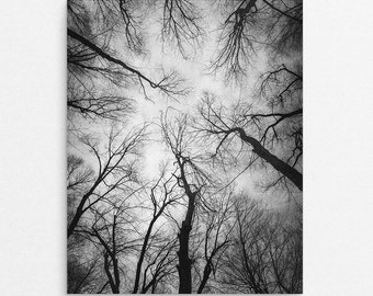 """Black and White Landscape Photography Print 