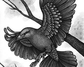 FLIGHT 8X10 India Ink Drawing on Watercolour Paper Crow Blackbird Bird Birds Fly Flying