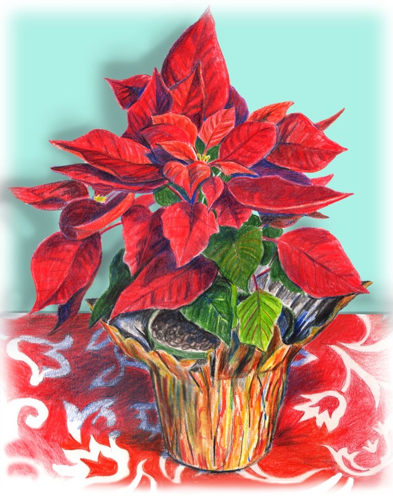 CHRISTMAS POINSETTIA, Red Poinsettia, Hawaiian Poinsettia, poinsettia  colored pencil drawing, flower pencil drawing