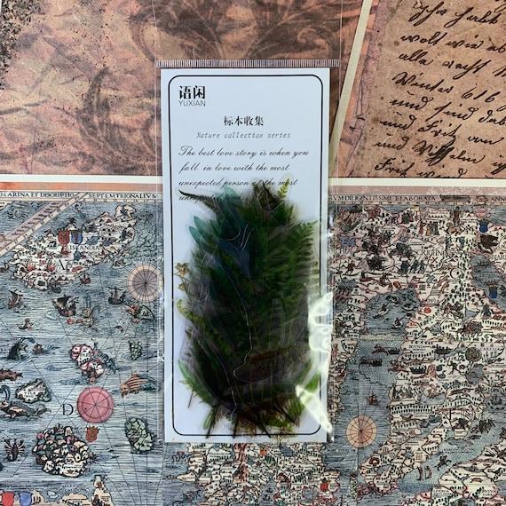 Ferns Botanical Transparent Journal Stickers, Junk Journal Kit, Ephemera Set, Stationery, Travel Journal, Vintage Style, Scrapbook, Bullet