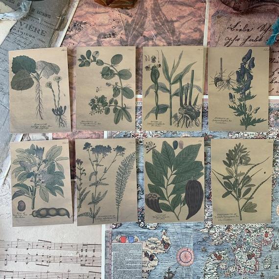Herb Garden Stickers 1, Ephemera Set, Stationery Set, Junk Journal Kit, Travel Journal, Sticker Set, Vintage Style, Garden Stickers