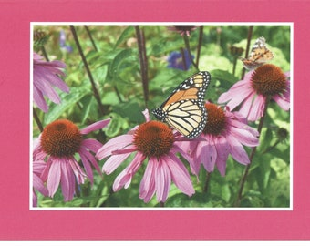 Butterfly on pink coneflower - photo card