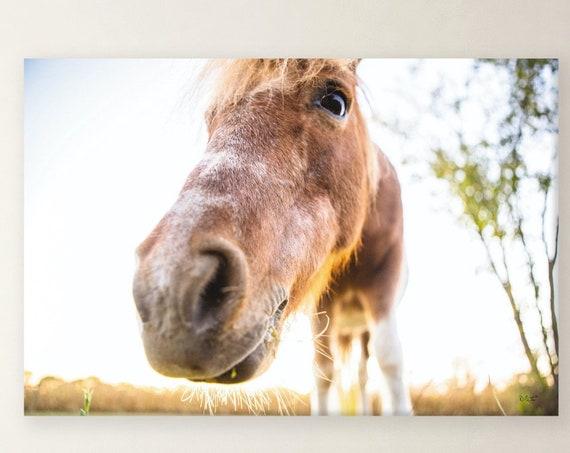 Horse Print - Hi Horse Print - Animal Print - Horse Poster - Print - Poster - Wall Art - Home Decor - Poster Print - Wall Print,