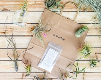 Gift Wrapped Air Plant Grab Bag of 10 Small and Medium Plants, Tillandsia Fertilizer & Air Plant Mister - FREE Shipping - 30 Day Guarantee