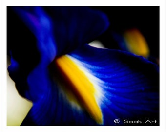 Blue Flower Photo Print, Blue Gladioli, Macro Fine Art Print, Blue and Yellow, Monochromatic, 8x10, Still Life, Nature Close Up,