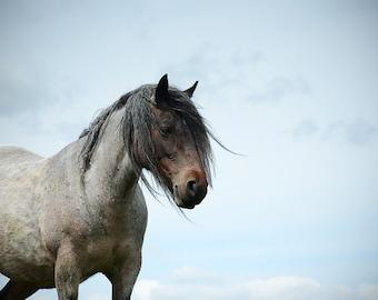 Equestrian decor, equine art, horse photo, rustic horse, animal photograph, dales pony