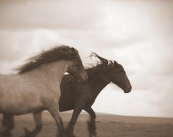 Equestrian decor, equine art, horse photo, rustic horse, horse art, animal photograph, dales pony, sepia horse photo