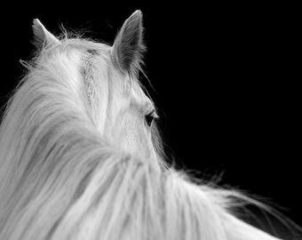 Horse photo, equine art, white pony, animal photograph, black and white horse photography, minimalist decor, grey
