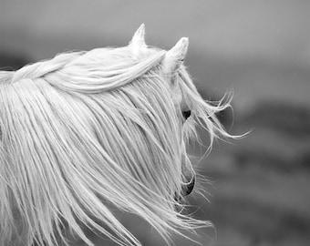Black and white horse photo, horse wall art, white pony, animal photography, windswept, LARGE SIZES