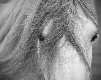 Equestrian decor, equine art, horse photo, rustic horse, horse art, animal photograph, dales pony
