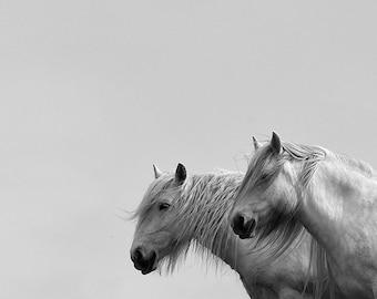 Horse photo, equine art, highland pony, animal photograph, black and white horse photography, minimalist decor, grey