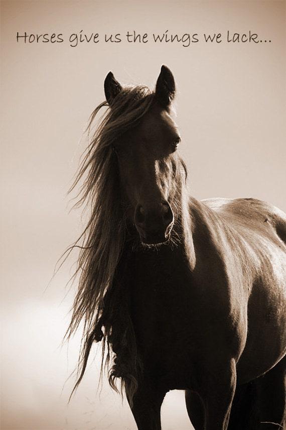 Inspirational Quote Quotation Horse Photo Horses Give Etsy