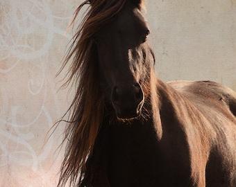Large horse art, autumn decor, horse photography, equine art, equestrian decor, rustic wall art, various sizes