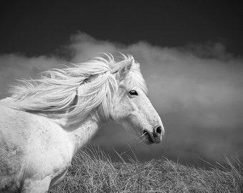 Horse photography, equine art, rustic art, white horse, animal photograph, horse, home decor, eriskay pony, horse print,