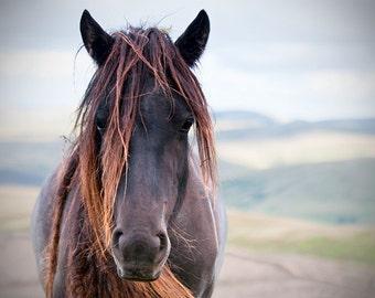 Horse photo, equine art, rustic art, brown horse, animal photograph, chestnut brown, barn decor, fell pony