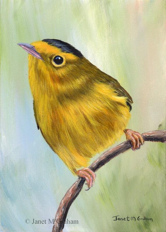 Image result for wilsons warbler art