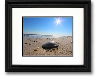 Lavallette Sunflare Shell