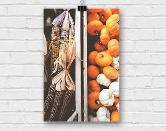pumpkin patch - pumpkins and decorative corn fall photography
