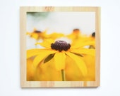 Wood Mounted Dreamy Brown Eyed Susan Floral Fine Art Photography